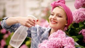 glücklicher Frauengärtner mit Blumen Gewächshausblumen Blumensorgfalt und -bewässerung Boden und Düngemittel hydrangea stock footage