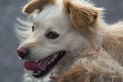 Glücklicher Hund Stockfoto