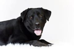 Glücklicher Hund Lizenzfreie Stockbilder