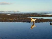 Glücklicher Hund 2 Stockbild