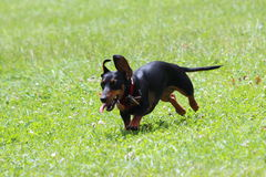 Glücklicher Hund Lizenzfreie Stockfotografie