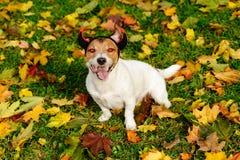 Glücklicher Hund als Halloween-Teufel mit roten Flammenaugen und -hörnern Stockfotos