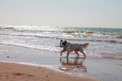 Glücklicher Hund auf einem Strand Stockbild