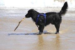 Glücklicher Hund, der auf dem Strand spielt Stockfoto