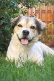 Glücklicher Hund, der auf Gras liegt stockfoto