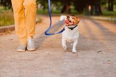 Glücklicher Hund, der auf Leine mit Frau am Abendpark während des Sonnenuntergangs geht Lizenzfreie Stockfotografie