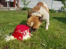 Glücklicher Hund, der aus den Grund isst stockfoto