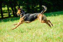 Glücklicher Hund, der froh auf einem grünen Gras läuft stockfoto