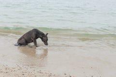 Glücklicher Hund, der im Meer spielt Stockbild
