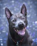 Glücklicher Hund, der in Kamera aufpasst Stockbild