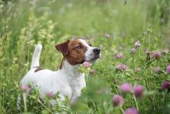 Glücklicher Hund draußen Lizenzfreie Stockfotos