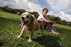 Glücklicher Hund am Feld Stockfoto