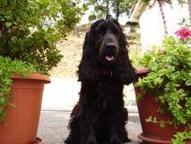 Glücklicher Hund mitten in Blumen Stockbild