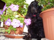 Glücklicher Hund mitten in Blumen Stockfoto