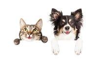 Glücklicher Hund und Cat Over White Banner Lizenzfreie Stockfotografie