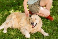 Glücklicher Hund und sein Eigentümer stockbild