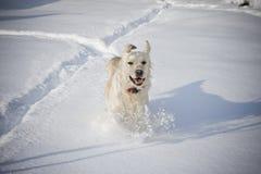 Glücklicher Hundebetrieb lizenzfreie stockbilder