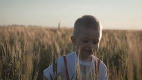 Glücklicher kleiner Kleinkindjunge, der Spaß auf dem Weizengebiet im Sommer bei Sonnenuntergang hat Gl?ckliche Kindheit sommerzei stock video footage