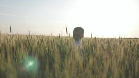 Glücklicher kleiner Kleinkindjunge, der Spaß auf dem Weizengebiet im Sommer bei Sonnenuntergang hat Gl?ckliche Kindheit sommerzei stock video