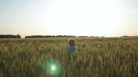 Glücklicher kleiner Kleinkindjunge, der Spaß auf dem Weizengebiet im Sommer bei Sonnenuntergang hat Gl?ckliche Kindheit sommerzei stock footage