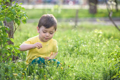 Glücklicher Kleinkindjunge mit den braunen Augen, die auf den Grasgänseblümchen sitzen, blüht im Park Stockfoto
