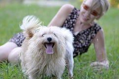 Glücklicher lächelnder Hund, der Spaß mit reifer Frau habend spielt stockbild