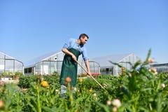 Glücklicher Landwirt, der Gemüse auf dem Bauernhof wächst und erntet stockfoto