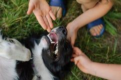 Glücklicher Schwarzweiss-Hund, der draußen mit zwei weiblichen Kindern spielt Stockbild