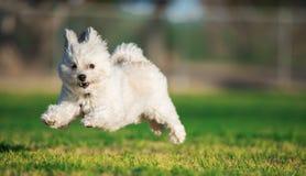Glücklicher springender Hund Stockbild