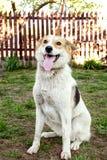 Glücklicher und aktiver Hund draußen im Gras Lizenzfreies Stockfoto