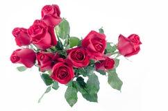 Glücklicher Valentinsgruß der Rosen-Blumenflora auf weißem Hintergrund Stockfotos
