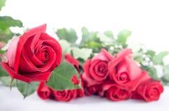 Glücklicher Valentinsgruß der Rosen-Blumenflora auf weißem Hintergrund Stockbild