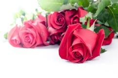 Glücklicher Valentinsgruß der Rosen-Blumenflora auf weißem Hintergrund Lizenzfreie Stockfotografie