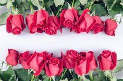 Glücklicher Valentinsgruß der Rosen-Blumenflora auf weißem Hintergrund Lizenzfreie Stockbilder