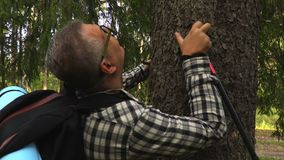 Glücklicher Wanderer geht zum Baum stock video