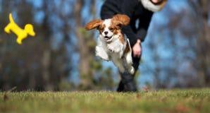 Glücklicher Welpe, der draußen im Frühjahr spielt Lizenzfreies Stockfoto