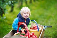 Glückliches blondes Kleinkind mit der hölzernen Laufkatze voll vom organischen Rot appl Stockbild