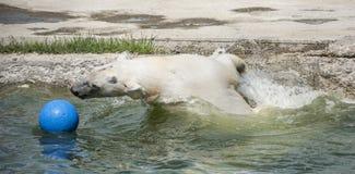 Glückliches Eisbärschwimmen Lizenzfreie Stockbilder