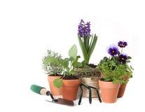 Glückliches Frühlings-Zeit-Kraut, das auf weißem Backgrou im Garten arbeitet Stockfotos