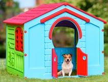 Glückliches Haustier, das in der bunten Hundehütte u. in x28 sitzt; gemacht von Kinderspielplatz house& x29; Lizenzfreies Stockfoto