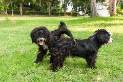 Glückliches Hundespielen und -eile im Gras Lizenzfreie Stockfotos