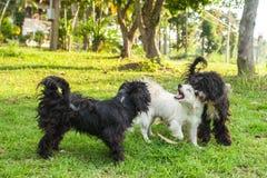 Glückliches Hundespielen und -eile im Gras Stockfoto