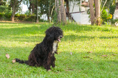 Glückliches Hundespielen und -eile im Gras Lizenzfreies Stockbild