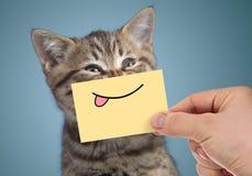 Glückliches Katzenporträt mit lustigem Lächeln und der Zunge stockbilder