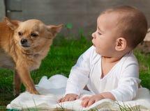 Glückliches kleiner Junge Kind und Chihuahua verfolgen zusammen stockfotografie