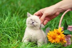 Glückliches kleines Kätzchen, das nahe Korb mit Blumen sitzt Stockfotografie