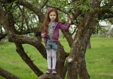 Glückliches Mädchen, das auf enormem Baum der Niederlassung steht Lizenzfreies Stockfoto