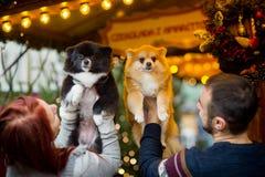 glückliches Mädchen mit Reisenfall Junge Paare auf dem Weihnachtsbasar mit Haustieren Stockfotos