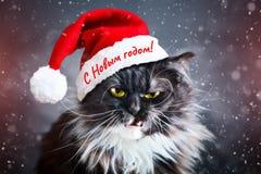 Glückliches neues Jahr Neues Jahr ` s Katze in einem Weihnachtshut neu Stockbild