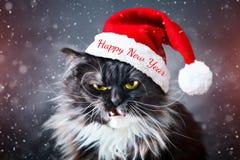 Glückliches neues Jahr Neues Jahr ` s Katze in einem Weihnachtshut neu Lizenzfreies Stockfoto